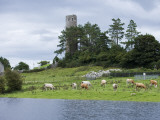 Cattle and Round Tower