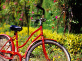 Red Bicycle  Half Moon Resort