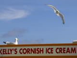 Ice-Cream Van and Seagulls