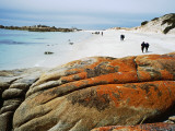 Bushwalkers on Beach at Stumpy Bay  Bay of Fires Walk
