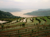 Terraced Rice Fields in Fuling-Chongqing