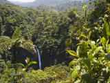 Waterfall and Rainforest