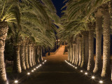 Palm-Lined Path and Pier at Night