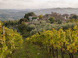 Vineyards in Hamlet of Castello Di Volpaia  Near Radda in Chianti