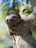 Sloth Living in Parque Centenario