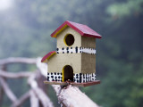 Bird House on Levada Do Furado Levada Walk