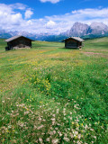 Alpine Meadow with Sasso Lungo  Alpe Di Susi  Dolomites