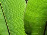 Leaf Fronds