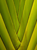 Detail of Palm Leaf