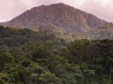 Rainforest on Mountain Slopes