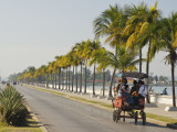 Horse Cart Bus Going Down Palm Tree-Lined Paseo Del Prado