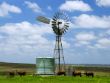 Watering Cattle Beneath Windmill on Darling Downs  Southern Queensland