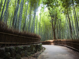 Bamboo Forest Walkway  Arashiyama District