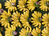 Bananas Sold at Damnoen Saduak Floating Market