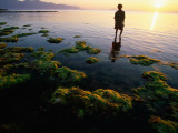 Harvesting Seaweed Beds of Vietnam's South Central Coast