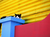 Cat Sleeping in Barrio La Boca