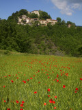 Poppies in Wheat Field with Caprese Michelangelo in Background