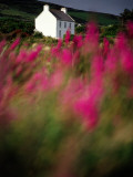 A Farmhouse Through the Wildflowers of Waterville in County Kerr