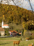 Cows and Village