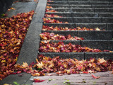 Steps and Autumn Leaves  Jishou Temple