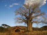 Babu's Camp