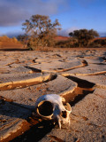 Cracked Mud  Dunes and Monkey Skull in Namib Desert Near Sossusvlei