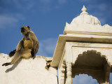 A Monkey on One of Pushkar's Lakeside Temples
