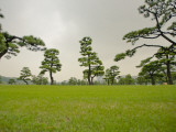 Kokyo-Gaien (Imperial Palace Gardens) Park  Covered with Pine Trees