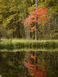 Autumn Colour and Reflection in Pond  Hokkaido University Forest