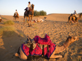 Resting Camels at Dusk in Sam Sand Dunes Near Jaisalmer