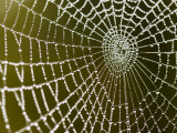 Spider Web Glistening with Dew Droplets