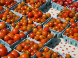 Organic Tomatoes for Sale at Saturday Market