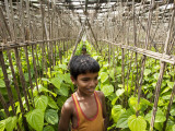 Children Playing in Local Paan Leaf Garden