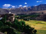 Village  Barley Fields and Ladakh Ranges  Ladakh