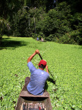 Man Paddling Through Dense Aquatic Hualma Plants in the Quebrada Nuevo Iquitos
