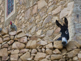 Hen and Donkey  Tizgui  Anti-Atlas Mountains