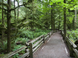Cathedral Grove in Mcmillan Regional Park