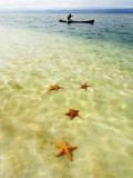 Sea Stars in Tropical Water at Star Beach