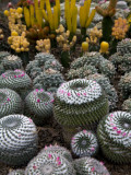 Cactus Garden in the Pine View Nursery