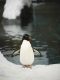 Penguin Standing Next to Pool in Snow at Asahiama Zoo