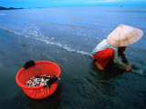Woman Digs for Crustaceans in Sandy Lagoon on Vietnam&#39;s Southern Coast
