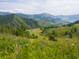 Mountains  Flower-Filled Meadows  and Farmland of the Altai Republic at Altayskiy