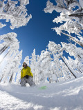 Snowboarder Going Through Trees in Powder Snow at Hoodoo Ski Resort