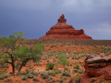 Lone Tree with Rock Formations in Desert Landscape with Storm Clouds in Valley of the Gods