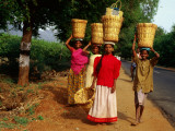 Agricultural Workers with Baskets on Heads
