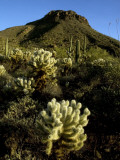 Flora on Hillside of Tucson Mountain Park