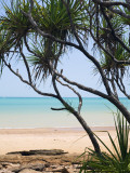 Vestey&#39;s Beach Through Pandanus Palms