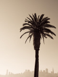 Palm Tree and Skyline