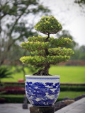 Bonsai Tree at Thai Hoa Palace