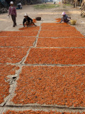 Shrimp Drying in Village on Tonle Sap Lake